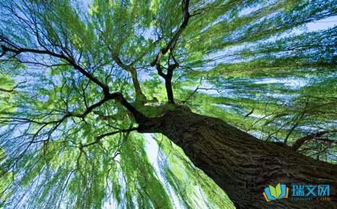 有关描写柳树的诗句