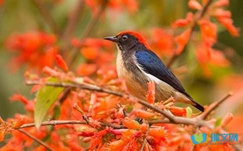 描写小鸟的诗句